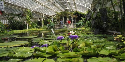 Hauptbild des Event Photo-outing: Botanical Garden am 2020-01-26